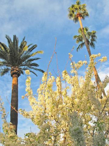 spring2010-3.jpg