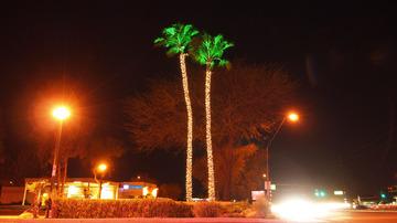 palm_trees_01.jpg