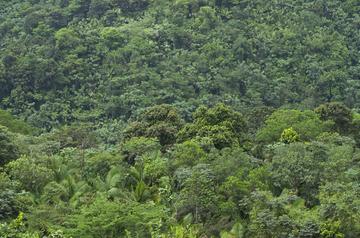 El Yunque 064.jpg
