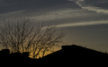 EveningTrees 001.jpg