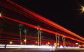 PalmTrees 011-3.jpg