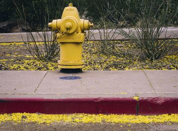 Yellow 001-1.jpg