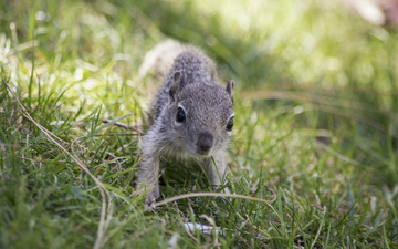 Squirrels 057.jpg