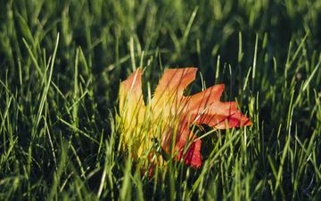 Fall 001-1-2.jpg