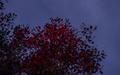 Wednesday_cloudy 020-1.jpg