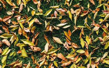 Leaves 001s.jpg