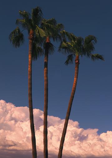 Palm_Trio_Panorama1s.jpg