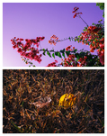 Fall_collage_01.jpg