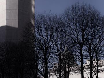 Boston_trees_winter_concrete.jpg
