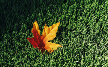 Fall_Leaf_on_AstroTurf 001.jpg