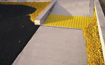 Palo_Verde_Blossom_Sidewalk_Yellow_04.jpg