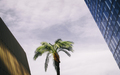 Monday_Objects_Palm_Tree_between_Buildings.jpg