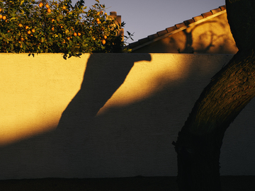 Winter_Sunset_Shadows_Tree_Lemons_Colors.jpg