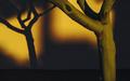 Winter_Sunset_Tree_Shadows_Colors_01.jpg