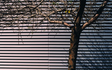 Tempe_Winter_Deciduous_Tree_Steel_Vent_01.jpg