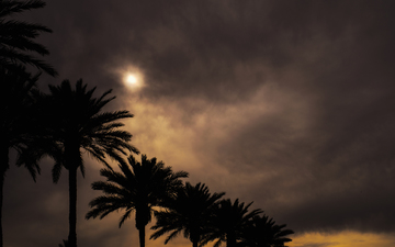 Sun_through_clouds_palm_trees_01.jpg
