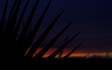 A_sunset_with_palm_trees_in_Tempe_2.jpg