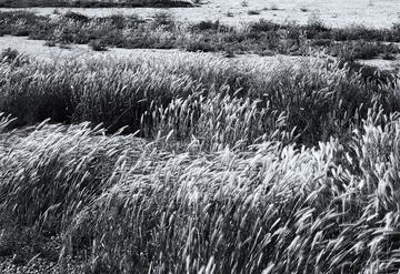 Spring_in_Tempe_Desert_Field_black_white_d.jpg