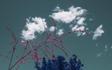 Tempe_Tuesday_Clouds_Plants_False_Color_01.jpg