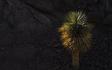 Tempe_in_May_ASU_Arboretum_Palm_Tree_Sun_Rocks_01.jpg