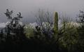 Tempe_in_May_ASU_Arboretum_Saguaro_Cactus_Sun_Rocks_01.jpg