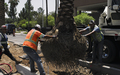Palm_Tree_Planting_with_Crane_Roots_Dirt.jpg