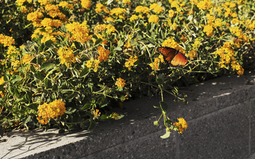 An_October_Day_Monarch_Butterfly_02.jpg