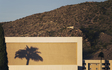 Tempe_A-mountain_palm_tree_projection.jpg