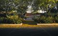 Tempe_COVID-19_Sunday_Empty_City_Palo_Verde_tree.jpg