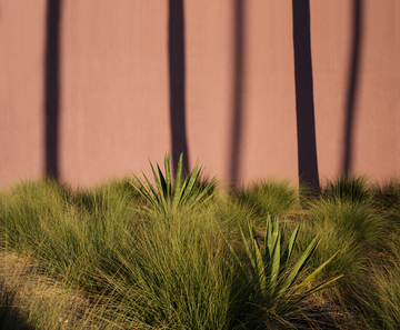Tempe_October_Desert_Forest_in_the_Fall_Abstraction.jpg