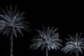 Perennial_Palm_Tree_Fronds.jpg