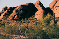 Desert_Detail_Papago_Park_Cactus_Dead_Tree_in_February.jpg