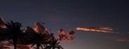 Last_September_Day_Sunset_Clouds_Palm_Trees.jpg